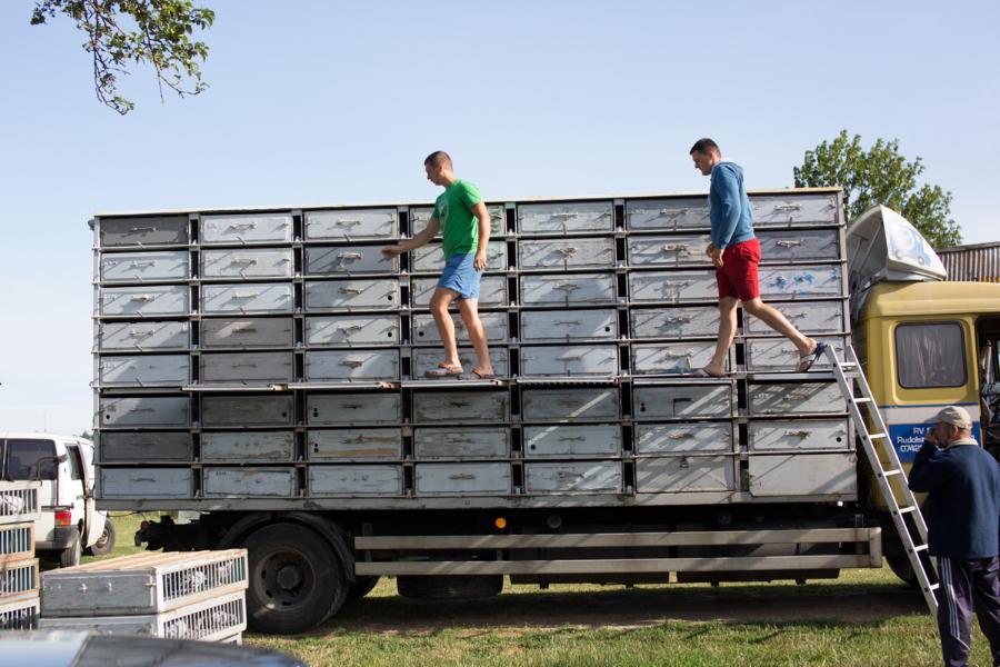 Jaunuoliai užlipa išimti tuščių dėžių, kurias pakeis pilnomis su varžybiniais balandžiais.