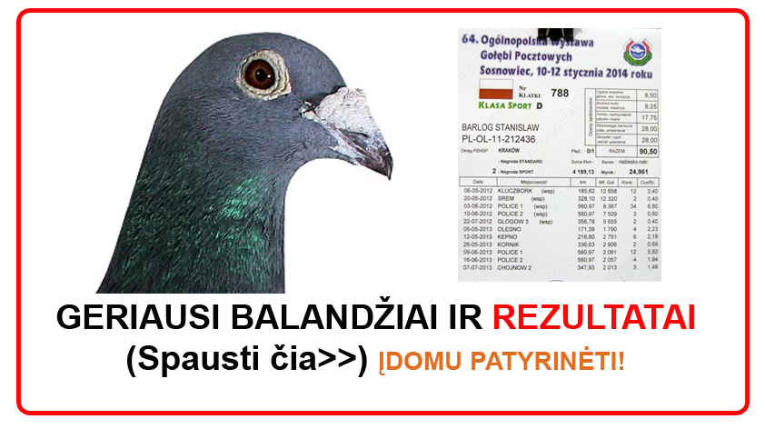 racingpigeons_sosnowiec2014a