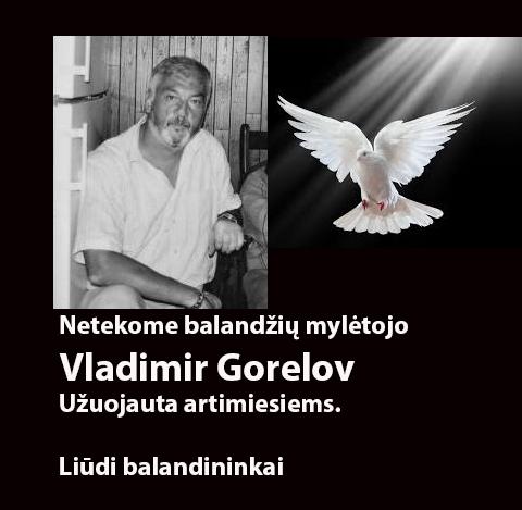 vladimir_gorelov